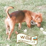 willie_two_july_2018ps