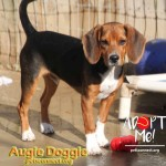 auggie_august_23_2018 (1)ps