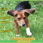 augie_doggie_august_20_2018 (5)ps