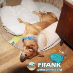 frank_aug_29_2018 019 (2)ps