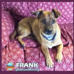 frank_on_couch_sept_2018ps