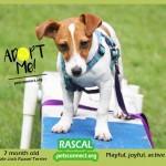 rascal_sept_3_2018 (3)ps