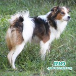 rio_dog_yard_seotenber_24_2018 (3)ps