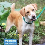 pebbles_october_8_2018 (7)ps
