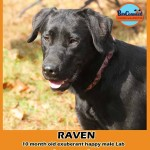 raven_october_28_2018 (6)ps