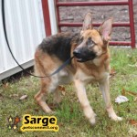 sarge_october_28_2018 (1)ps