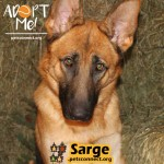 sarge_october_28_2018 (4)ps