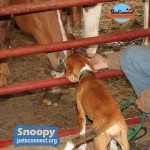 snoopy_october_28_2018 (12)ps