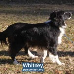Whitney_again_January_2019 (3)ps