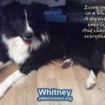 whitney2_january_2019 (4)ps